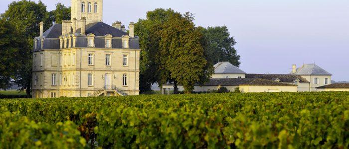 Vignes de Bordeaux