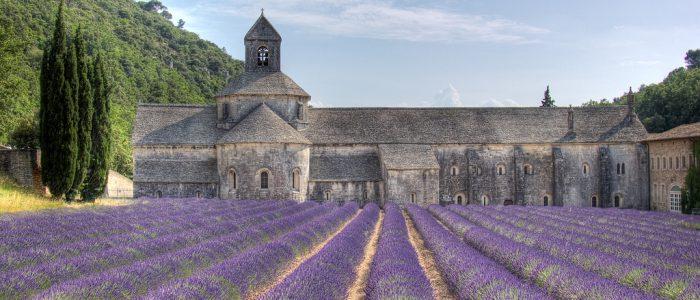 Champs de lavande, Provence